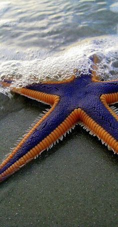 There's nothing more dreamy than finding a starfish washed up on a sandy beach!