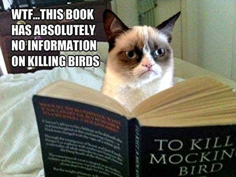 to kill a mockingbird ~ She read further . . . there is NO information on killing ANY birds!! WTF!