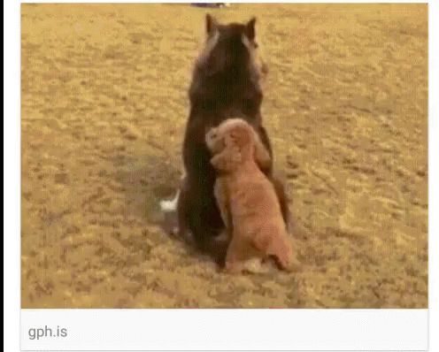 Perros GIF - Perros - Discover & Share GIFs