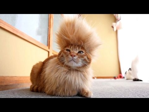CATS you will remember and LAUGH all day! - World's funniest cat videos - YouTube