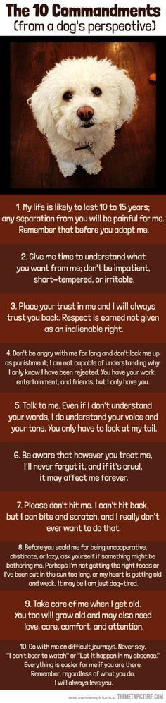 Commandments from a dog's perspective (Pretty much the same for any animal you choose to have as a pet). ❤❤
