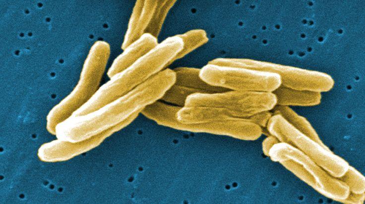Christian Gram  Em 1884, o médico Christian Gram desenvolveu um corante até hoje utilizado para a separação de bactérias em dois grandes grupos: Gram-positivas e Gram-negativas.  VAMOS CONHECÊ-LO >>https://goo.gl/jHNSgh<<