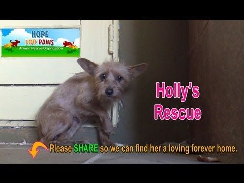 Rescuing a terrified abandoned dog - The transformation will amaze you! ...