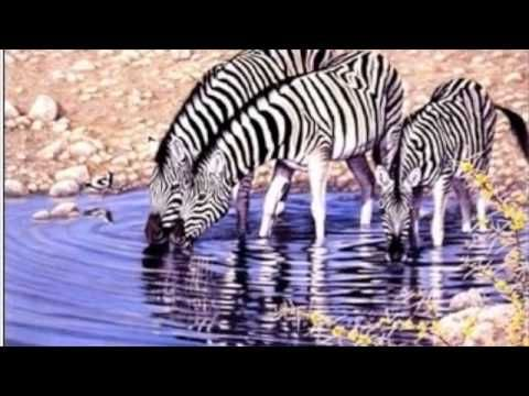 Animal Needs video