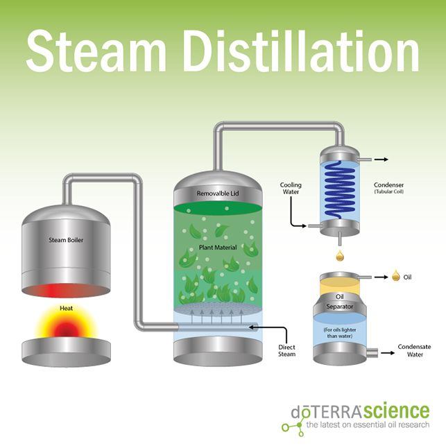 Steam Distillation of essential oils