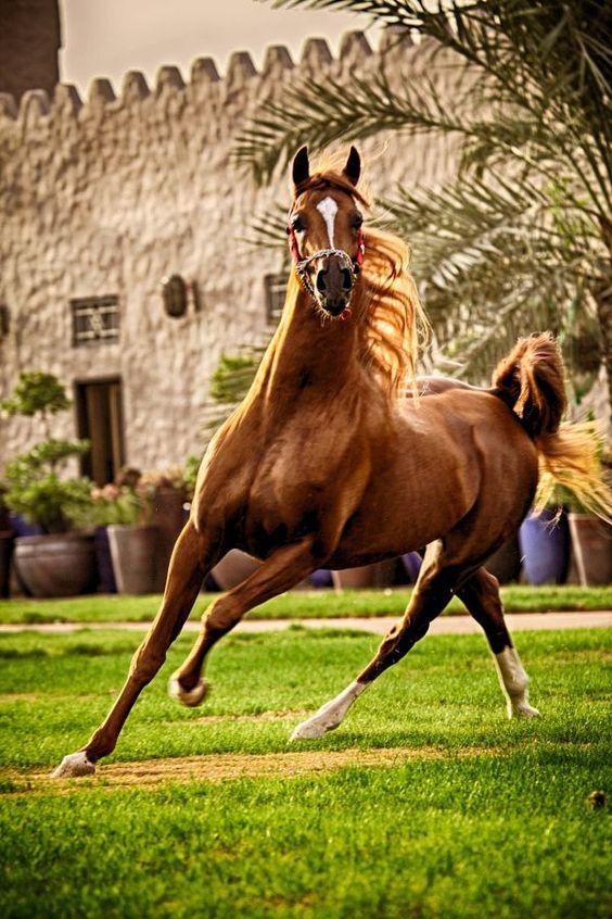 10 wunderschöne Pferde mit erstaunlichen Haaren