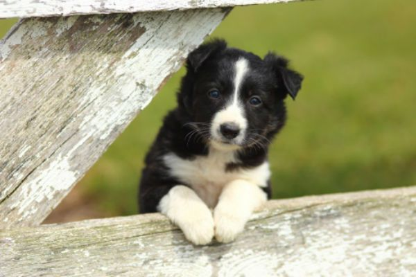 50 Cute Puppies You Ll Have To See To Believe Sheep Dog Puppy