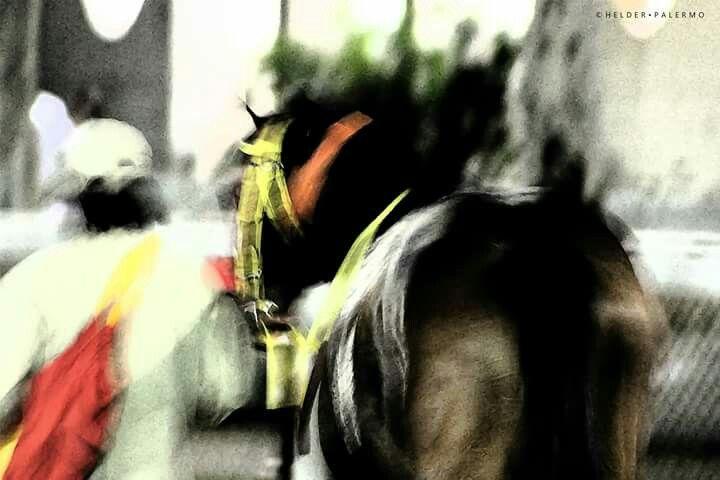 PHOTO PREMIUM - SELO TOP CLICK #amocavalos #bestpicture #cavalo #cavalos #casacor #crepusculo #decora #decoracao #decorar #decoracaodeinteriores #decorcasa #horse #jockey #jockeyclub #livingroom #lighting #moldura #molduras #pictureoftheday #photooftheday #poster #posterartr #posters #purosangue #quadros #quadrosdecorativos #sala #selotopclick