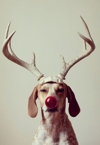 Don't forget to include your pooch in the family holiday photos! #DogsLifeMag #Christmas