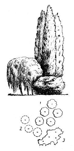 Рис. 20. Контрастная ландшафтная смешанная группа: 1 — тополь туркестанский; 2 — ива белая плакучая; 3 — калина обыкновенная