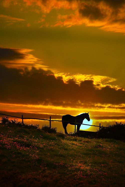 by gianmarco giudici  Primo!  Beautiful.....
