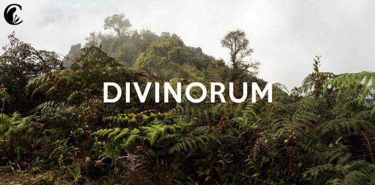Divinorum: el documental - http://growlandia.com/marihuana/divinorum-el-documental/
