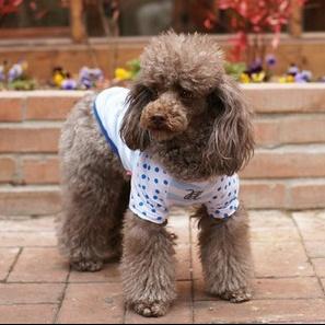예쁜 강아지티셔츠 오로라 티셔츠 @굿바이셀리