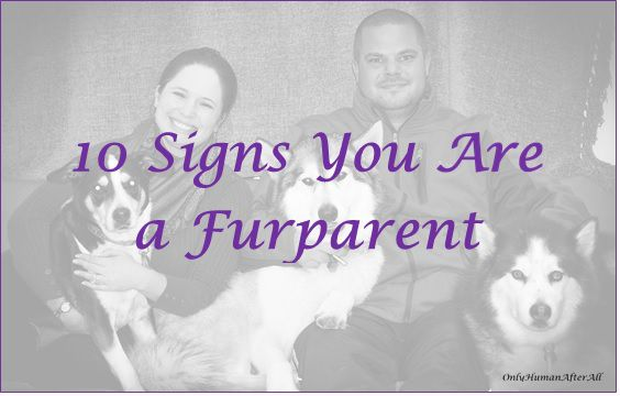 10 Signs You Are a Furparent... How many of these have you experienced?