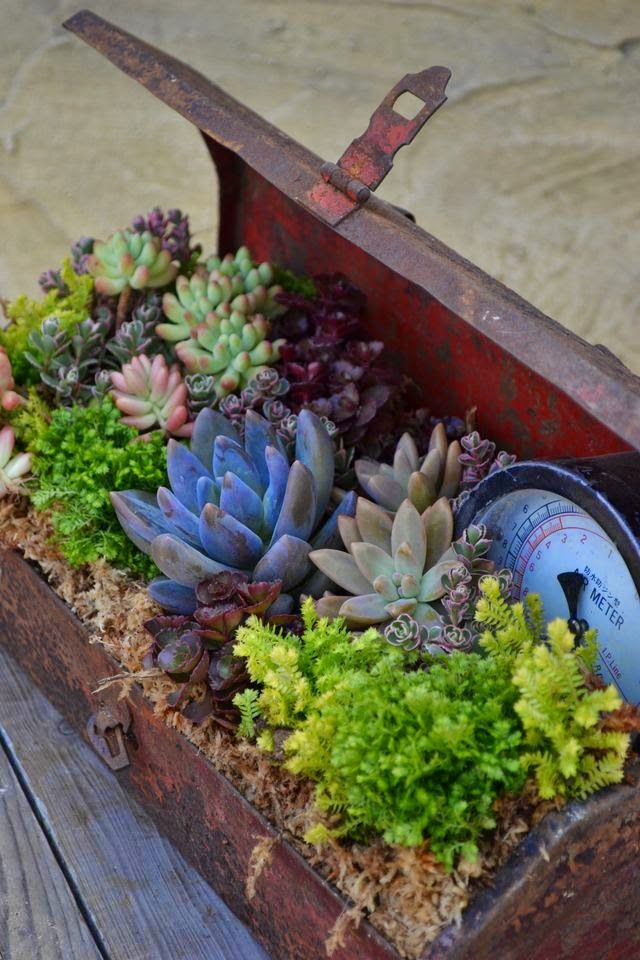 Container gardening is fun when you use an unusual item as the base. A vintage tool  box is perfect for ever-popular and easy to grow succulents.