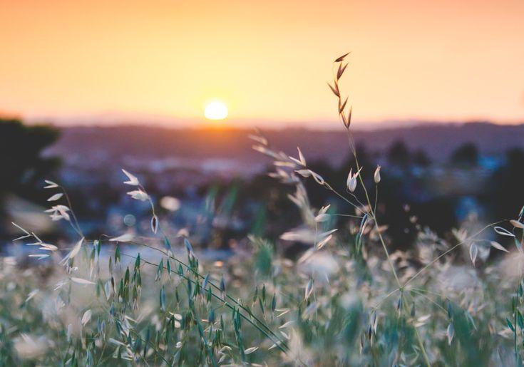 Purpose: Choosing to Have a Joyful Heart During Mundane Seasons