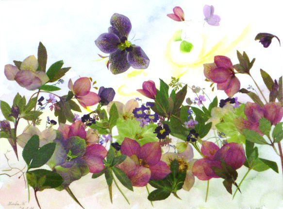 -Nagaoka- ポストカードクリスマスローズは春の花たくさんたくさん咲きましたお花の香りに誘われて蝶々も楽しく飛んでます生まれたての赤ちゃん蝶々母さん蝶々... ハンドメイド、手作り、手仕事品の通販・販売・購入ならCreema。