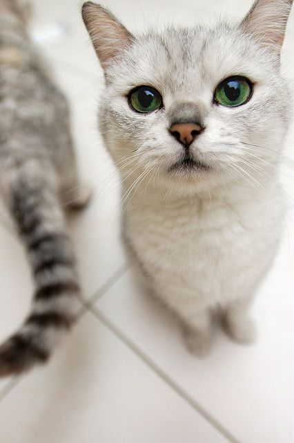 """""""Cats seem to go on the principle that it never does any harm to ask for what you want."""" --Joseph Wood Krutch"""