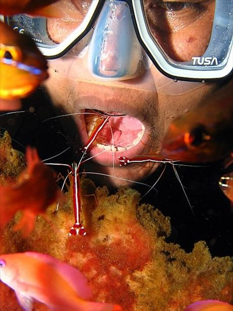 these shrimp are the dentists of the ocean