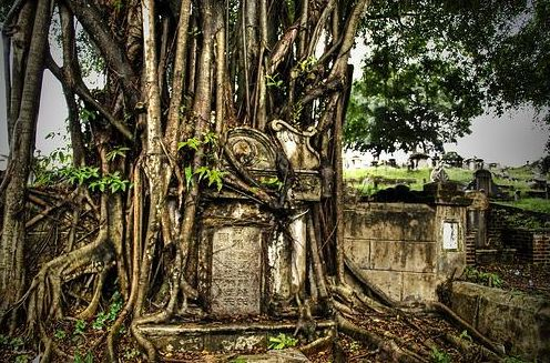 Old graveyard tree