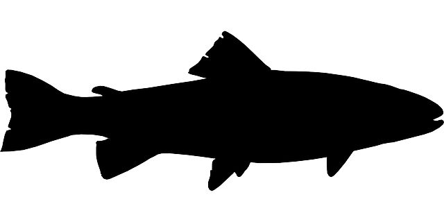 Fish, Black, Fishing, Silhouette, Trout