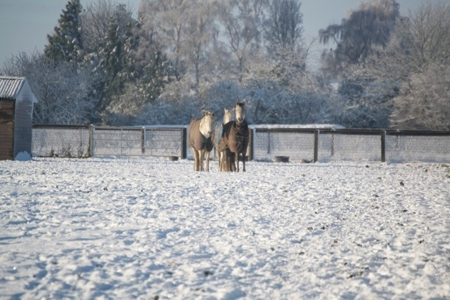 Horses in snow covered paddocks.