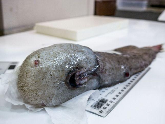 Arc nélküli halat fogtak ki a mélyből