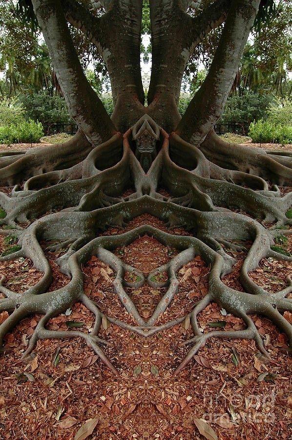 unusual trees | ल्् | Unique Tree