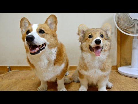Goro & Roku