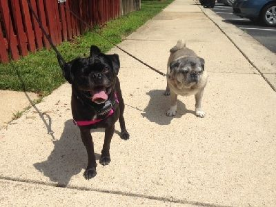 Dog Friendly Parks In Baltimore