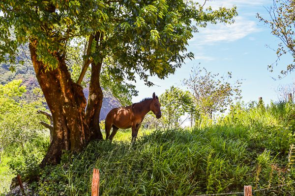Aldeia Velha. Rural Beauty just a bus ride or two away from Rio de Janeiro. Here you might be at peace with nature and yourself.