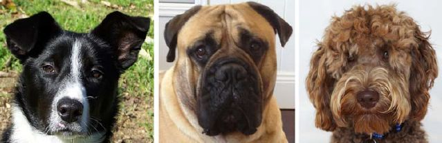Melyik a legcukibb kutya? Pontozzunk! #kutya #cuki #dog #cute #kutyabaráthelyek