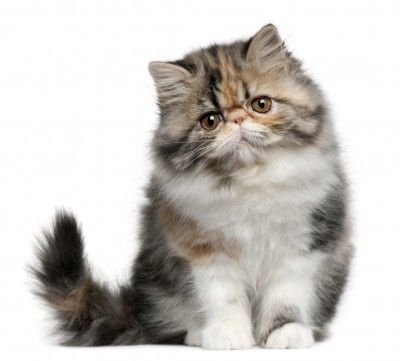 """""""I had to get rid of my husband--the cat was allergic."""" --Anonymous"""
