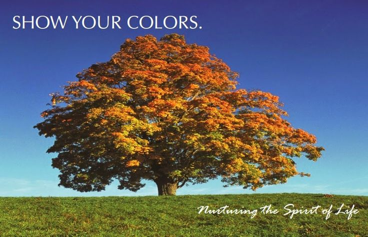 Juniper Village at Brookline Rehab and Skilled Care: Show Your Colors: October Events