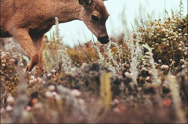 photography, nature, deer, wild, flowers, colour