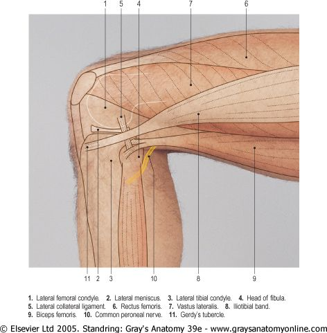 A delicious fuck-ton of human knee references. Yeah, just a quick mention of one of the above images… there's a cyst on one of those muscular diagrams… don't… don't include the cyst in normal anatomy. Unless you want to. But, yeah. Just thought it was worth mentioning. [From various sources]