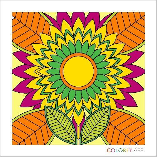 Colorfull sun flower