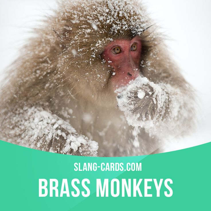 """Brass monkeys"" means very cold weather.  Example: You need to wear a coat…"