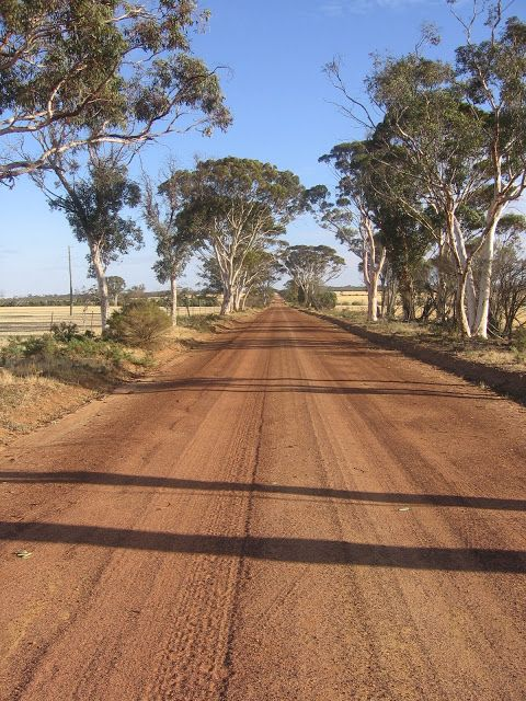 Rural Charm -- Australian Country Road lined by Gum Trees