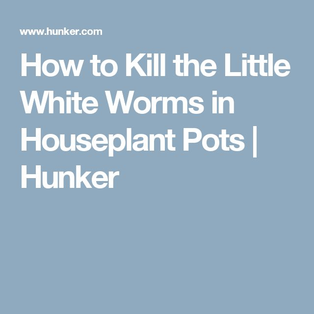 How to Kill the Little White Worms in Houseplant Pots | Hunker