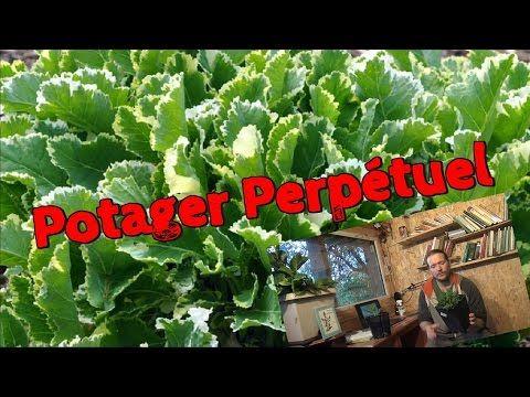 Plus de 1000 id es propos de permaculture sur pinterest jardins plates bandes sur lev es et - Quand tailler la lavande ...