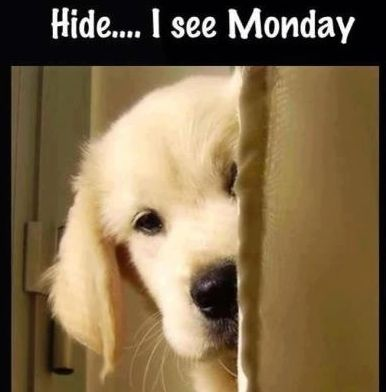I don't like Mondays either.... :D