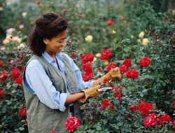 6 Ways To Jump-Start Your Roses for Spring