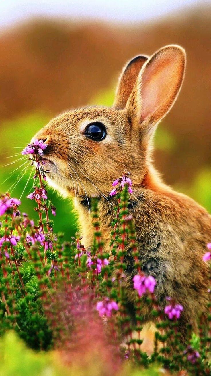 Обои Кролики, Rabbit, осень, листва. Животные foto 19