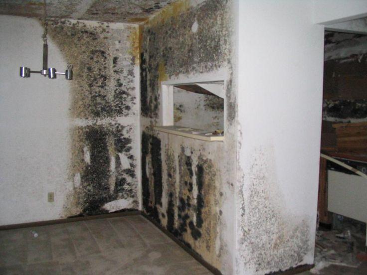 Safe Black Mold Removal in Orange County CA Creepy