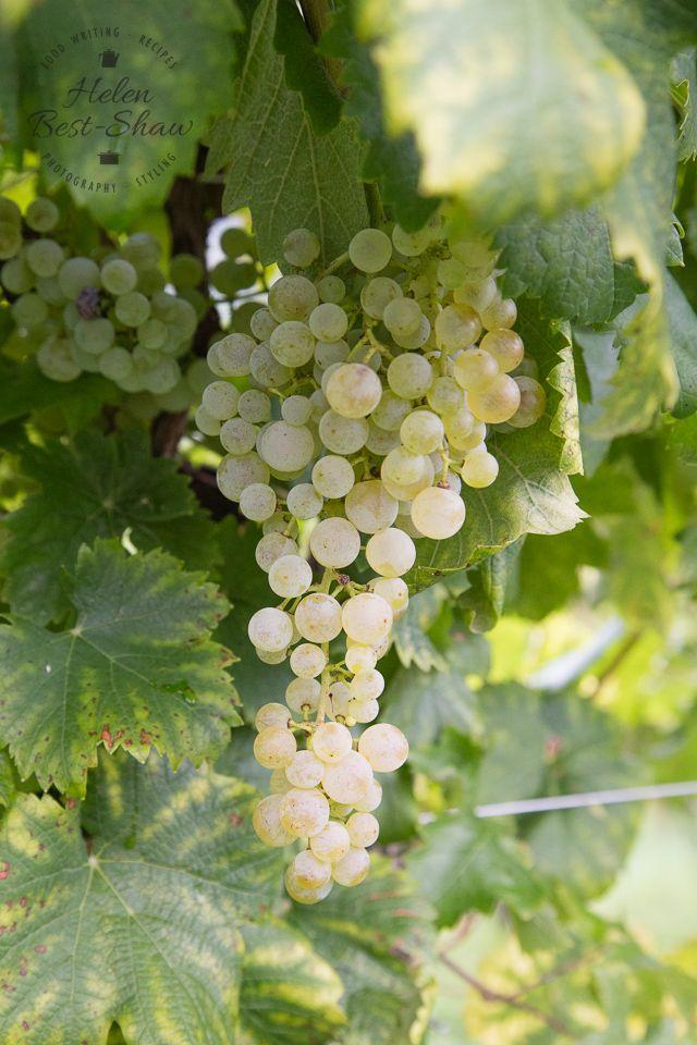 The Glera Grape | The story behind Conegliano Valdobbiadene Prosecco Superiore | Fuss Free Flavours