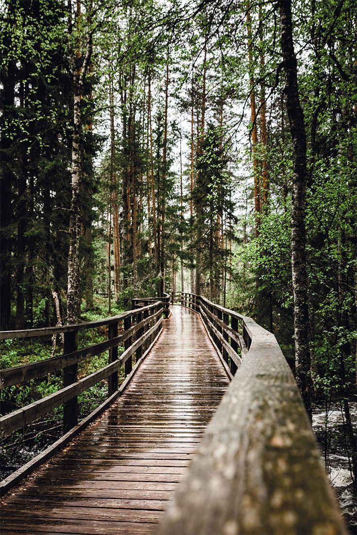 Beautiful nature in Ruunaa in  Finland. #finland #ruunaa #outdoors #naturephotography #naturelovers #finlandtravel #finlandtravelsummer