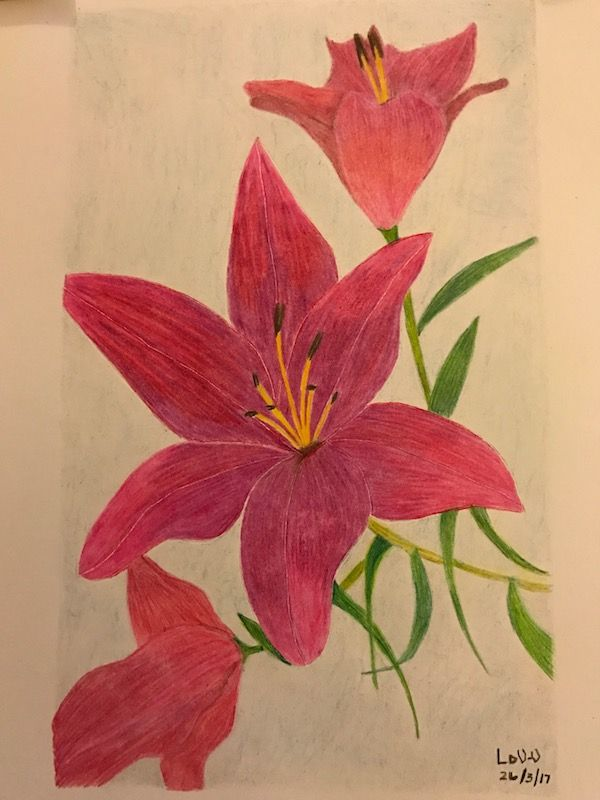 Flowers in coloured pencil. A4 white paper