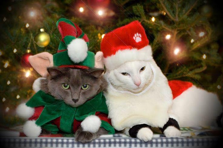 72 Best Christmas Holdiay Images On Pinterest