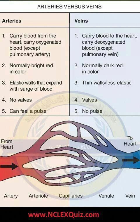 differences between artery and vein arteries  like veins